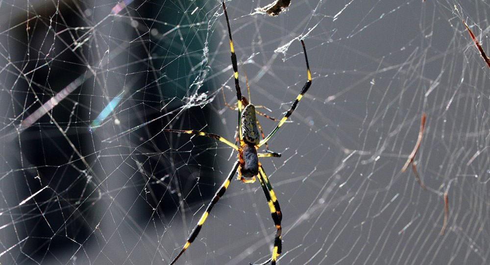 دراسة: سم العناكب يعالج السرطان