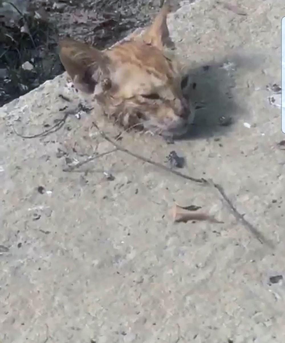 صورة مقتطعة من المقطع المنشور للحادثة