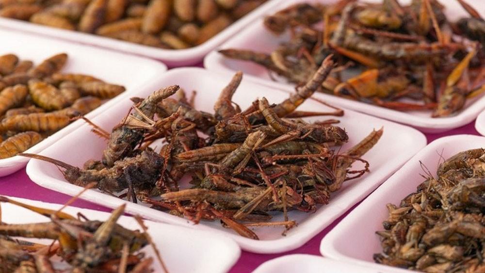"""دراسة مثيرة.. أكل الحشرات """"يحميك"""" من أحد أخطر أمراض العصر!"""
