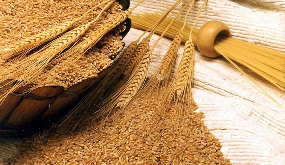 الأردن يشتري 60 ألف طن  من القمح